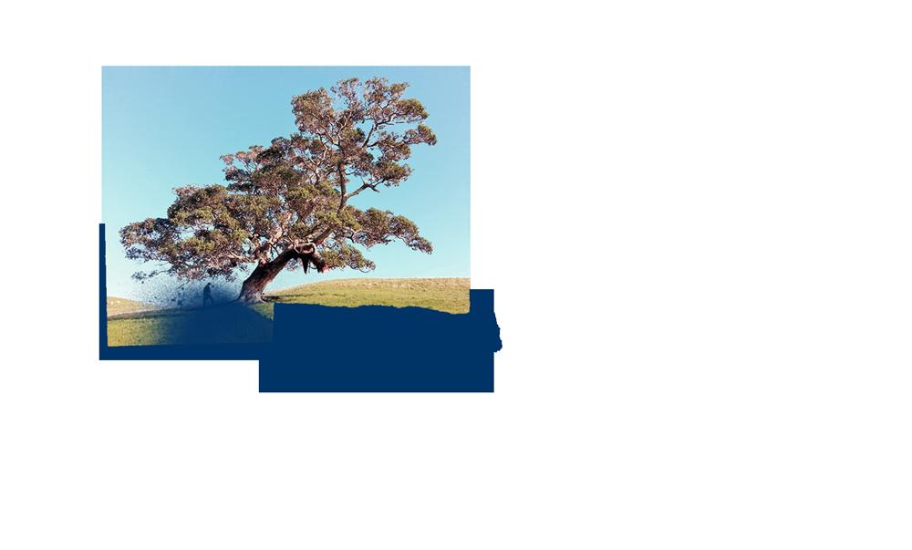 drzewox